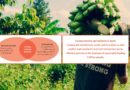 Trainers Manual & Toolkit: Evaluating Inclusive Business Models in Agribusiness and linking Smallholders to Markets