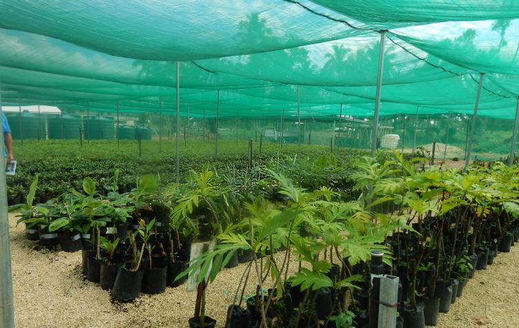 A Tour Of Tonga S Horticulture Industry To Transform Pacific Agri