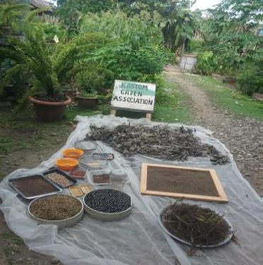 Increasing Access to Local Food Crop Planting Material for Improved Nutrition and Incomes in the Solomon Islands